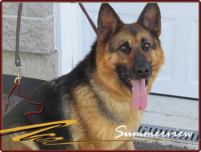 German Shepherd Breeder Canada
