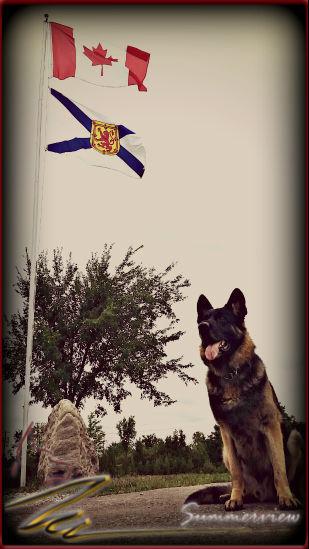 East and West German Shepherd Bloodlines